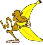Monkey holding a huge banana