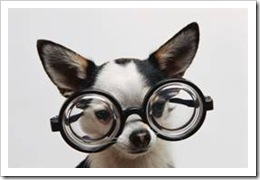 Dog wearing thick glasses