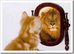 Cat looking at lion in mirror