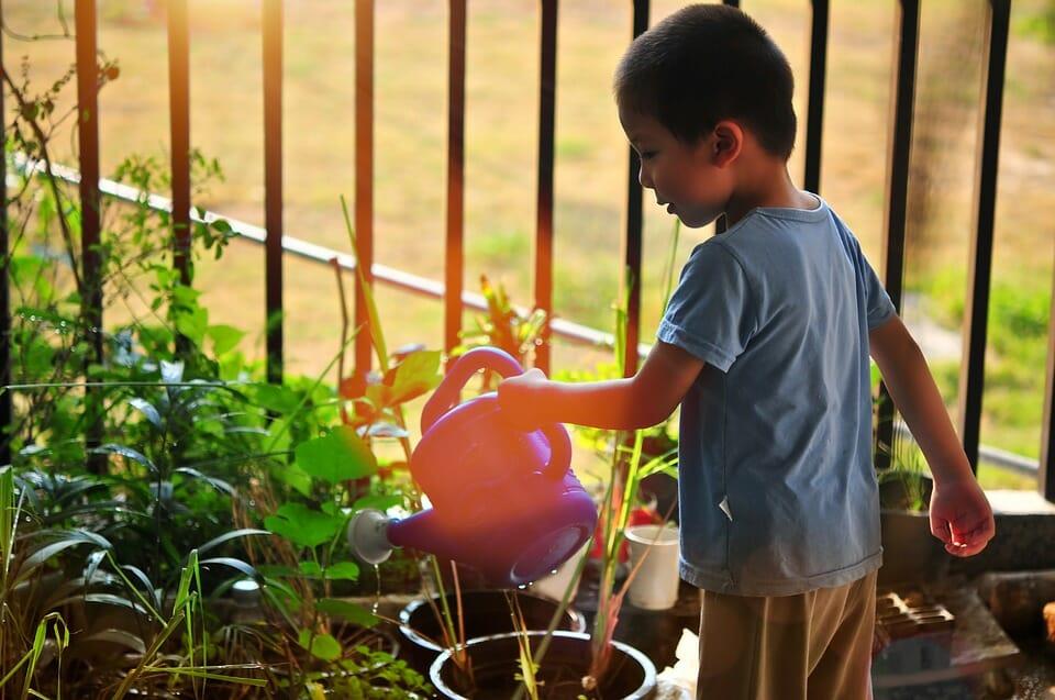 Boy watering plants