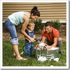 Parents with toddler washing the dog