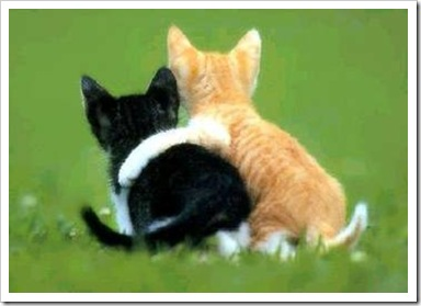 Kittens hugging
