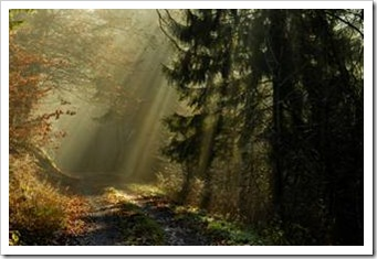 Dark forest with rays of light