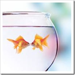 2 gold fish in a bowl