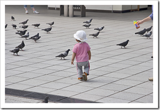 Toddler walking away to pigeons