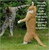 Cats fighting