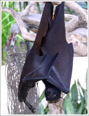 Bat handing upside down