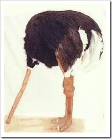 Ostrich with its head in the sand