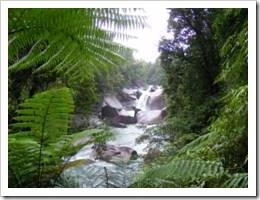 North QLD creek
