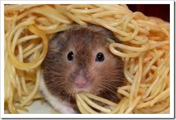 Rat eating spathetti