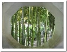 Bamboos by a window