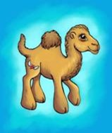 Young Camel