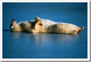Polar bear asleep on the ice