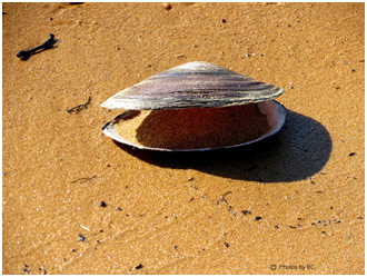 Clam shell - do you clam up?