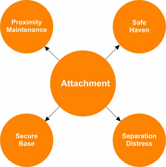 Characteristics of Attachment Theory