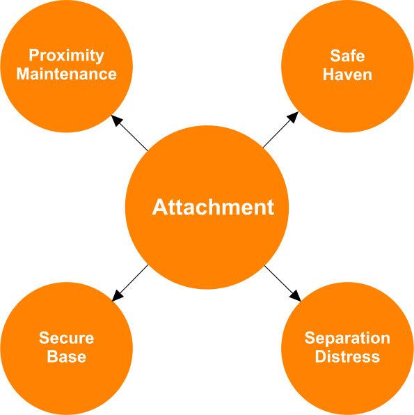 Attachment Theory  Main Characteristics Of Attachment