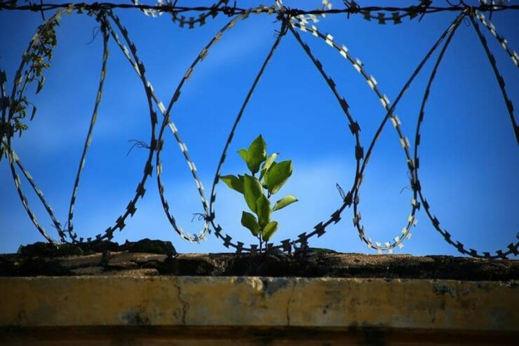 A plant growing behind a barbed fence