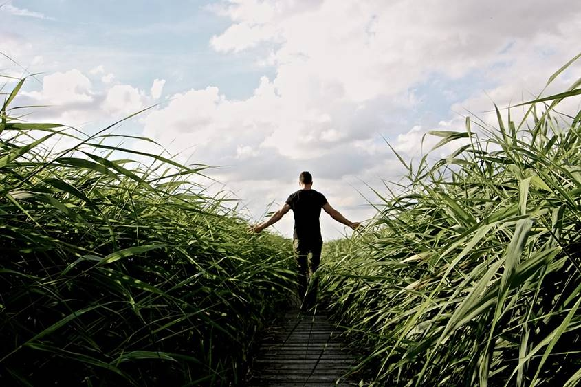 Man walking in a corn field