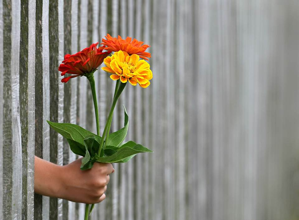 Hand holding a bouquet of flowers through a fence