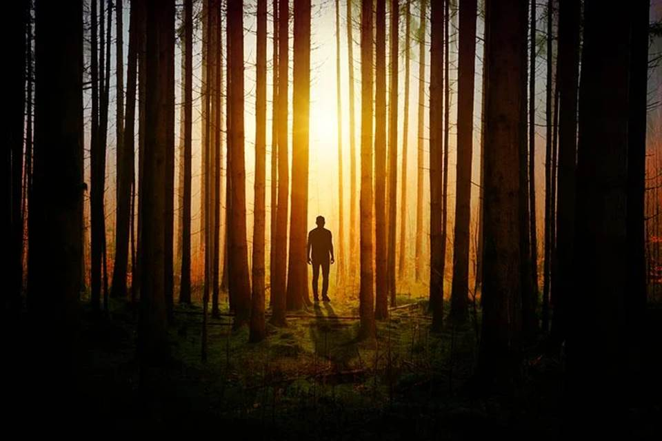 Sunlight penetrating the darkness in a forest where a man is standing
