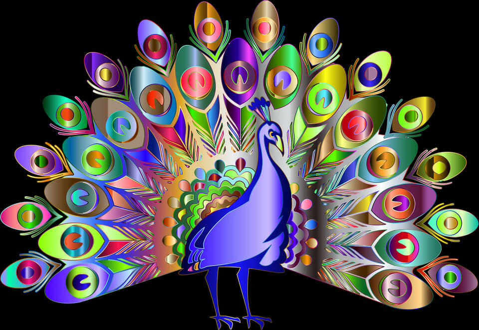 Brightly colored peacock
