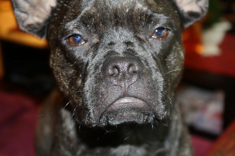 Dog looking resentful